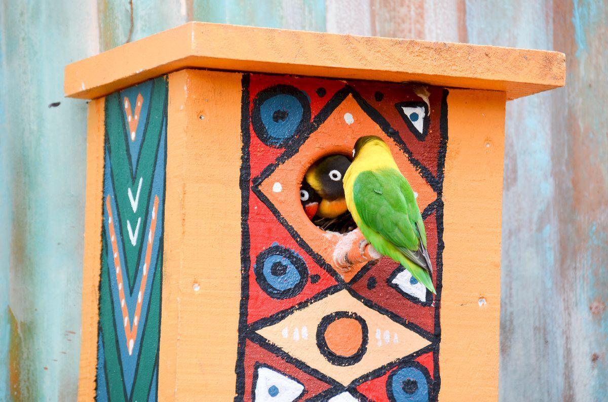auckland_zoo-0356