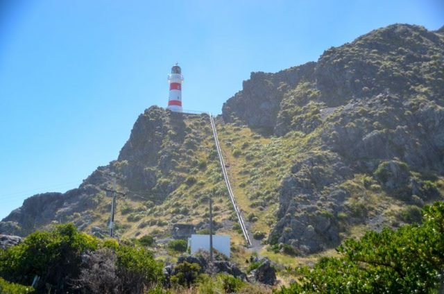 cape-palliser-lighthouse