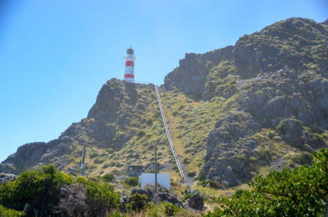 cape-palliser-lighthouse