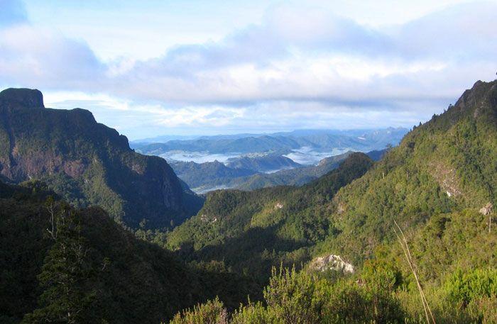 kauaeranga-valley-gallery