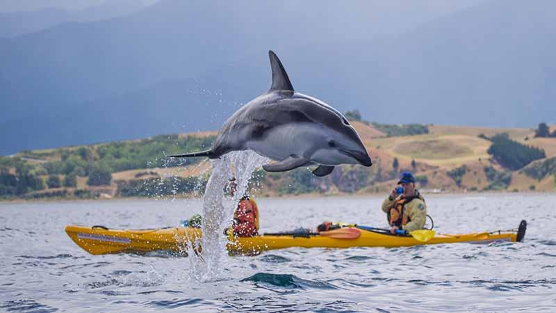 kayak-tour-kaikoura