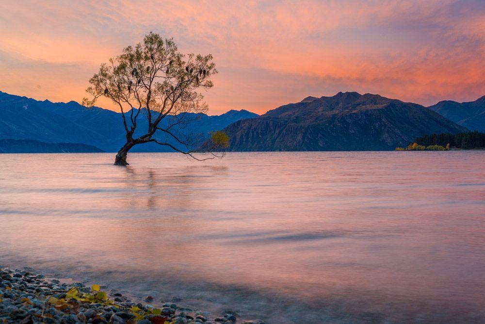 lone-tree-wanaka