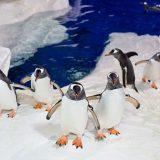 aquarium-auckland