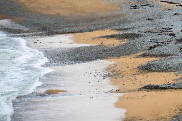 bushy-beach