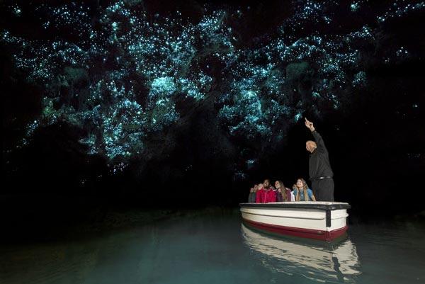 waitomo-caves-depart-auckland