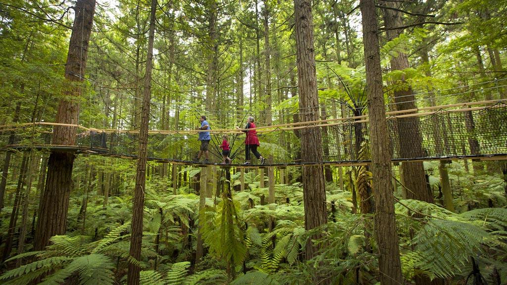 Rotorua-Redwoods-Treewalk